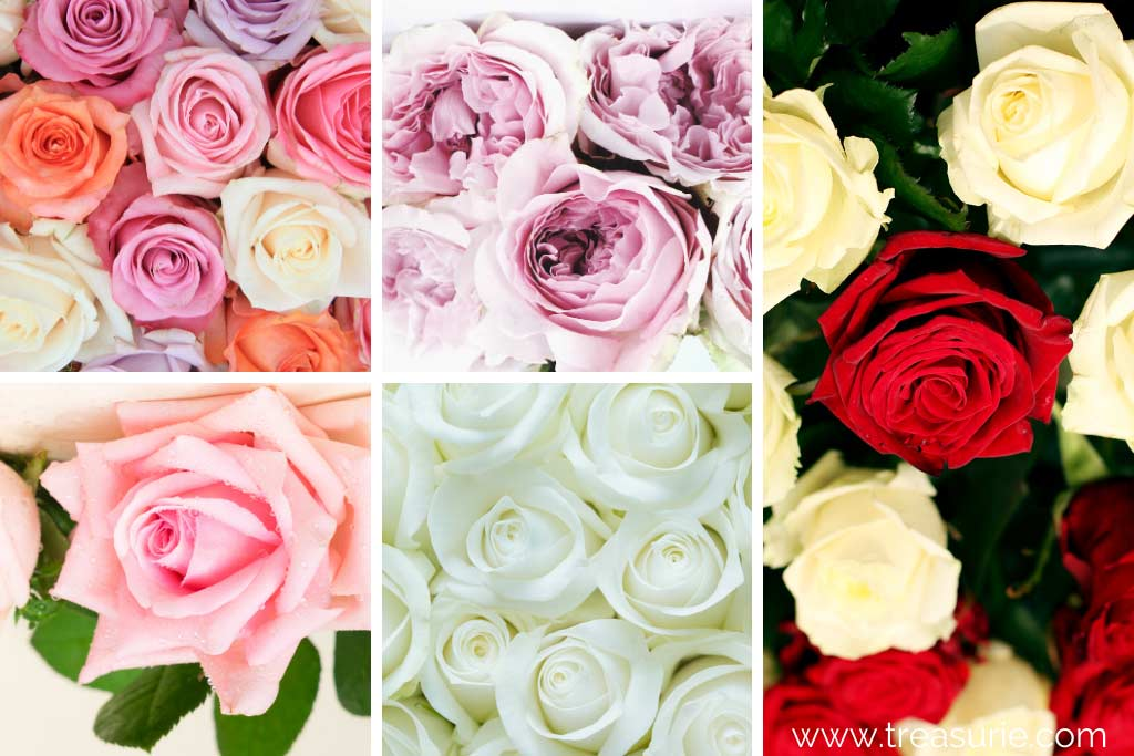 Embroidery Rose Colors